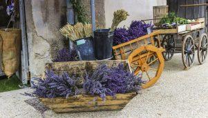 Provence Healing Holiday